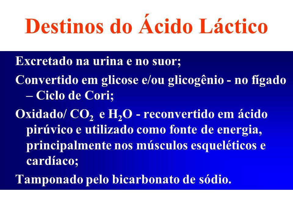 Destinos do Ácido Láctico Excretado na urina e no suor; Convertido em glicose e/ou glicogênio - no fígado – Ciclo de Cori; Oxidado/ CO 2 e H 2 O - rec