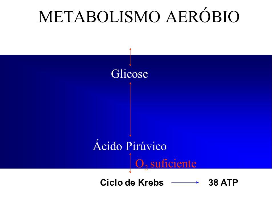 METABOLISMO AERÓBIO Glicogênio Glicose Ácido Pirúvico O 2 suficiente Ciclo de Krebs38 ATP