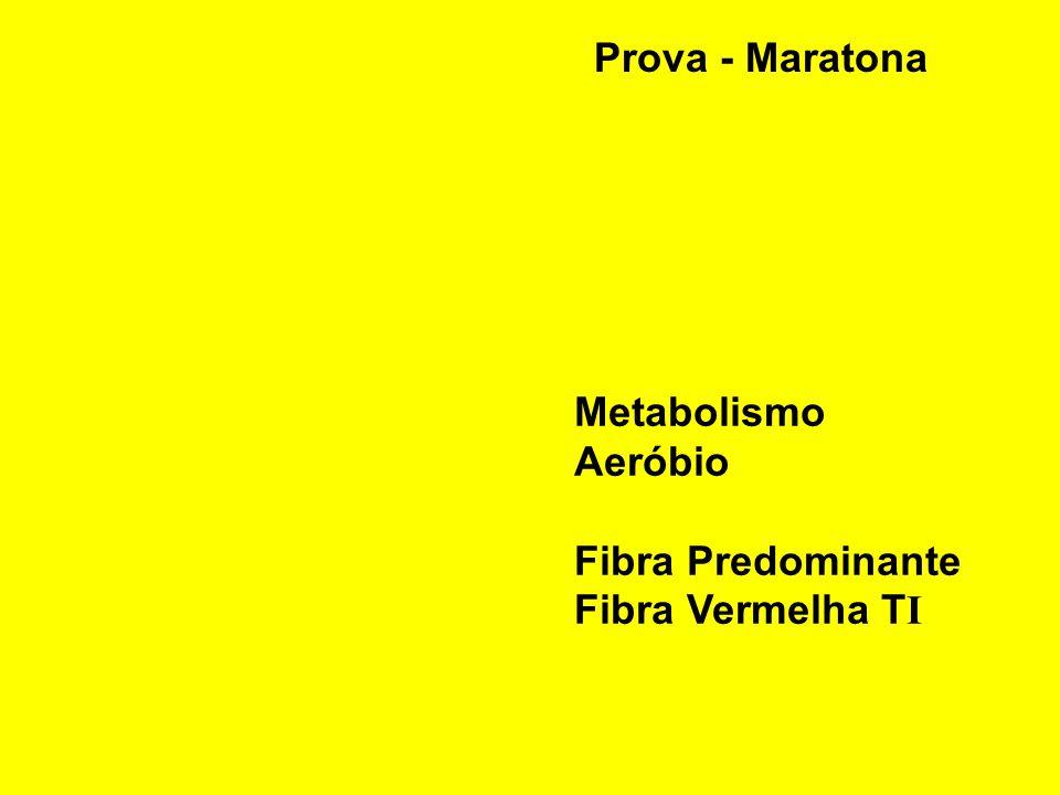 Prova - Maratona Metabolismo Aeróbio Fibra Predominante Fibra Vermelha T I