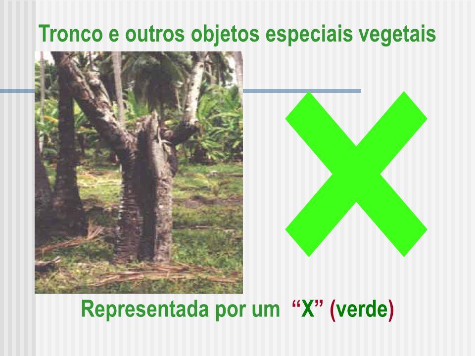 Tronco e outros objetos especiais vegetais Representada por um X (verde)