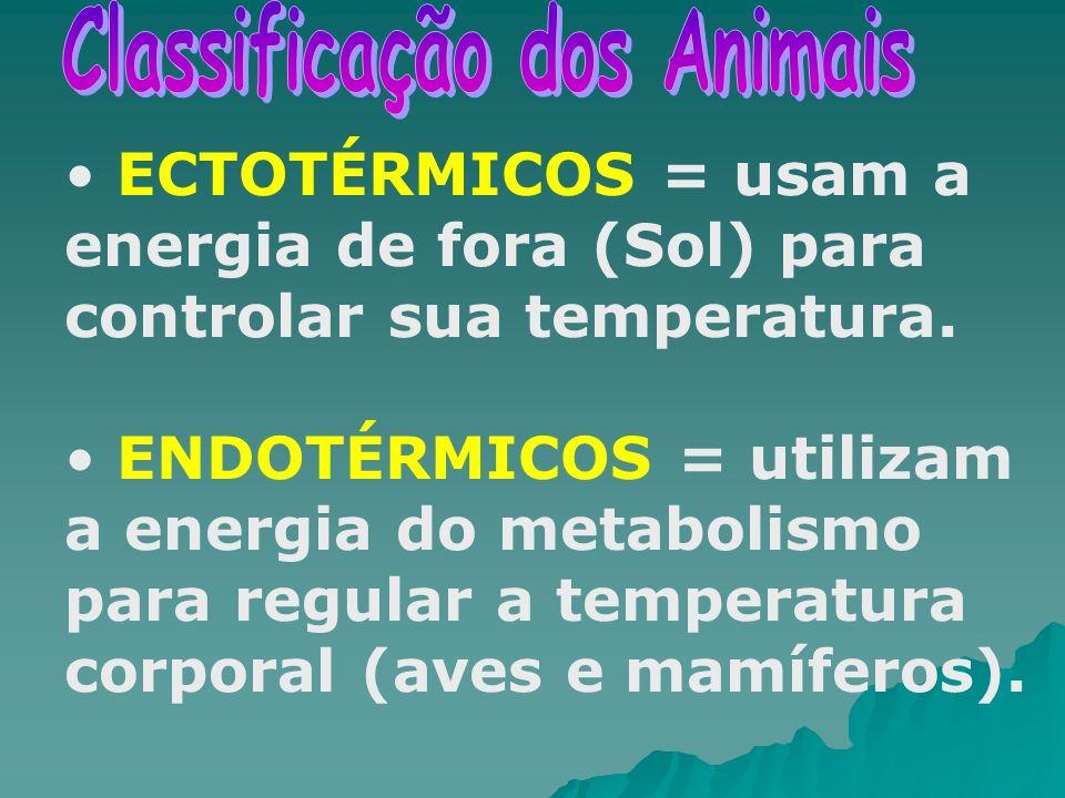 ECTOTÉRMICOS = usam a energia de fora (Sol) para controlar sua temperatura. ENDOTÉRMICOS = utilizam a energia do metabolismo para regular a temperatur