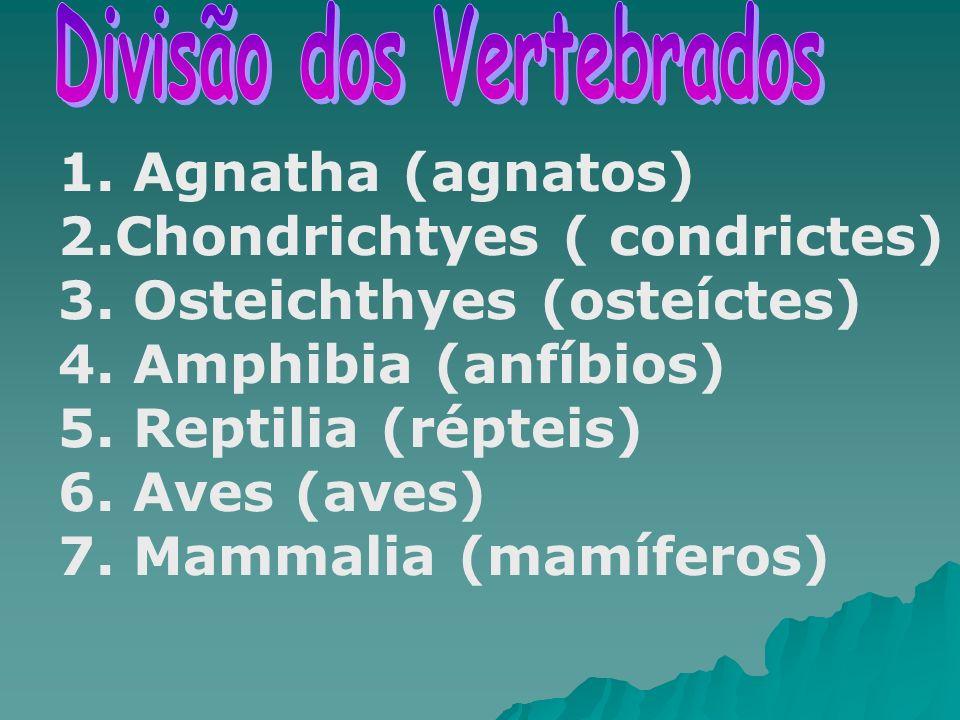 1. Agnatha (agnatos) 2.Chondrichtyes ( condrictes) 3. Osteichthyes (osteíctes) 4. Amphibia (anfíbios) 5. Reptilia (répteis) 6. Aves (aves) 7. Mammalia