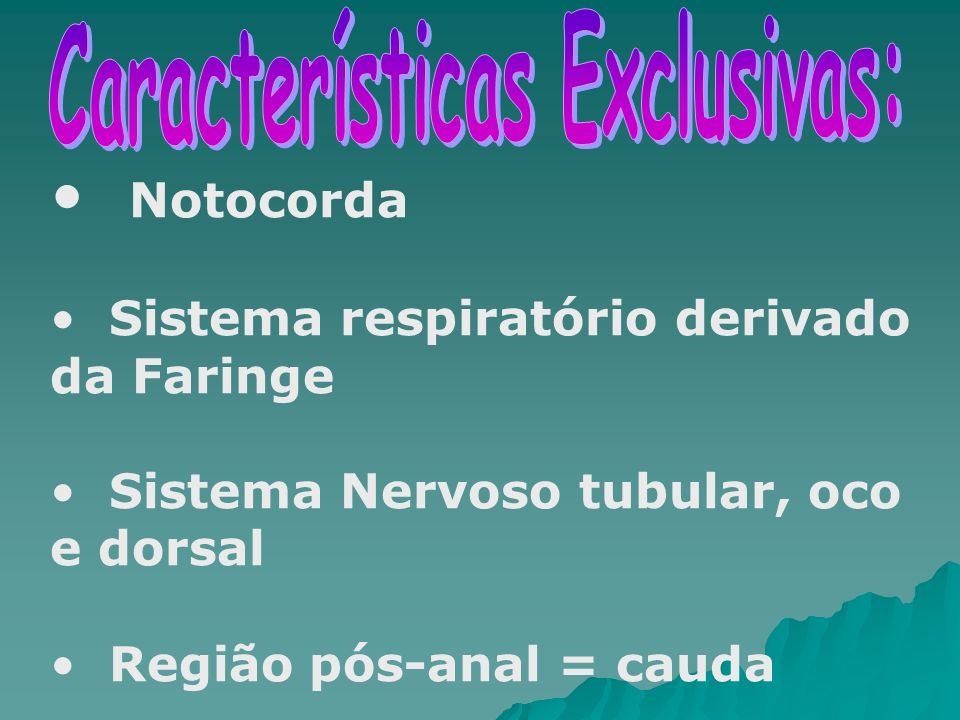 Notocorda Sistema respiratório derivado da Faringe Sistema Nervoso tubular, oco e dorsal Região pós-anal = cauda