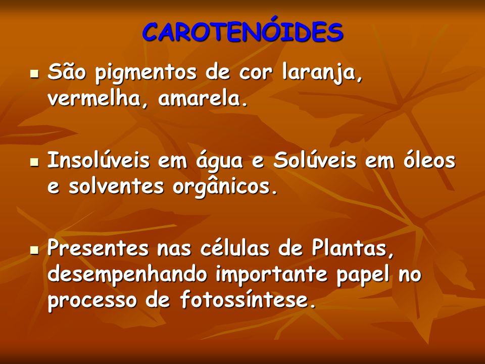 CAROTENÓIDES São pigmentos de cor laranja, vermelha, amarela. São pigmentos de cor laranja, vermelha, amarela. Insolúveis em água e Solúveis em óleos