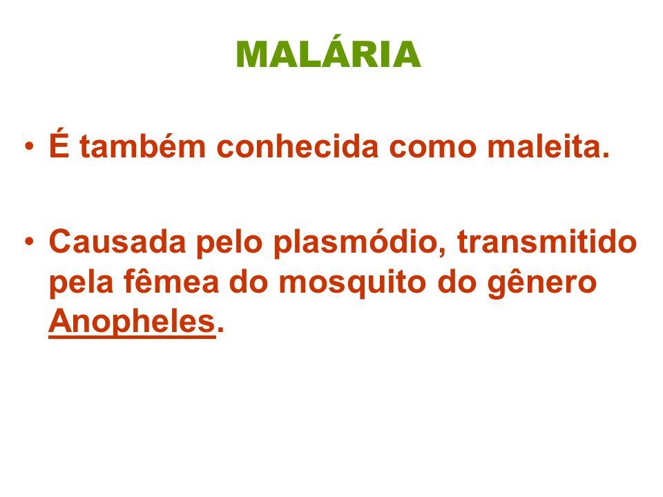 MALÁRIA É também conhecida como maleita. Causada pelo plasmódio, transmitido pela fêmea do mosquito do gênero Anopheles.