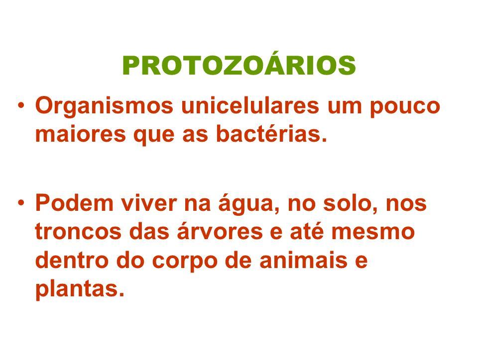 PROTOZOÁRIOS Organismos unicelulares um pouco maiores que as bactérias. Podem viver na água, no solo, nos troncos das árvores e até mesmo dentro do co