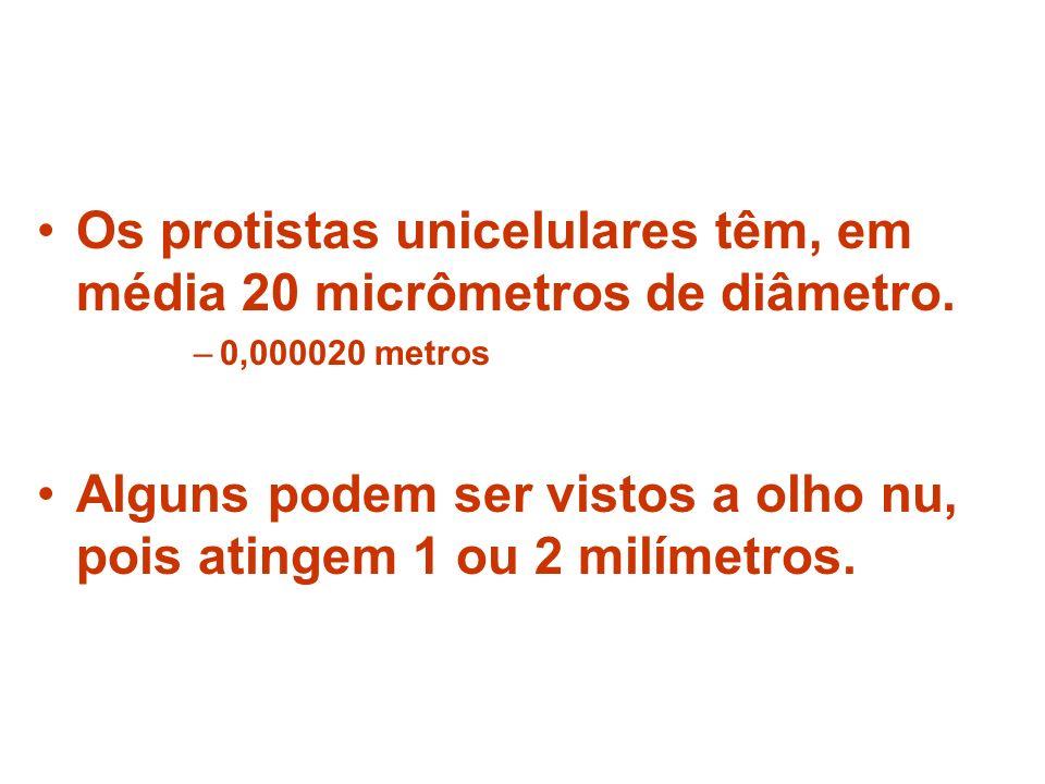 Os protistas unicelulares têm, em média 20 micrômetros de diâmetro. –0,000020 metros Alguns podem ser vistos a olho nu, pois atingem 1 ou 2 milímetros