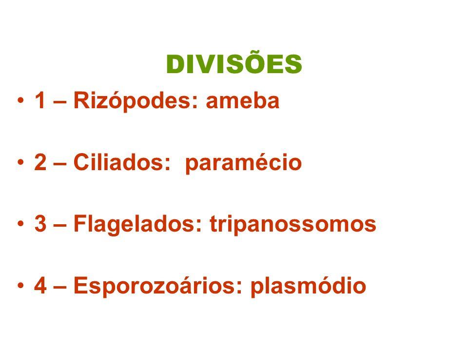 DIVISÕES 1 – Rizópodes: ameba 2 – Ciliados: paramécio 3 – Flagelados: tripanossomos 4 – Esporozoários: plasmódio
