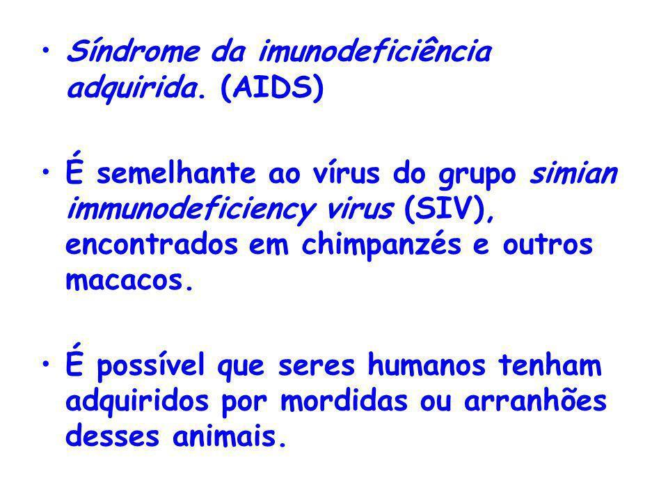 Síndrome da imunodeficiência adquirida. (AIDS) É semelhante ao vírus do grupo simian immunodeficiency virus (SIV), encontrados em chimpanzés e outros