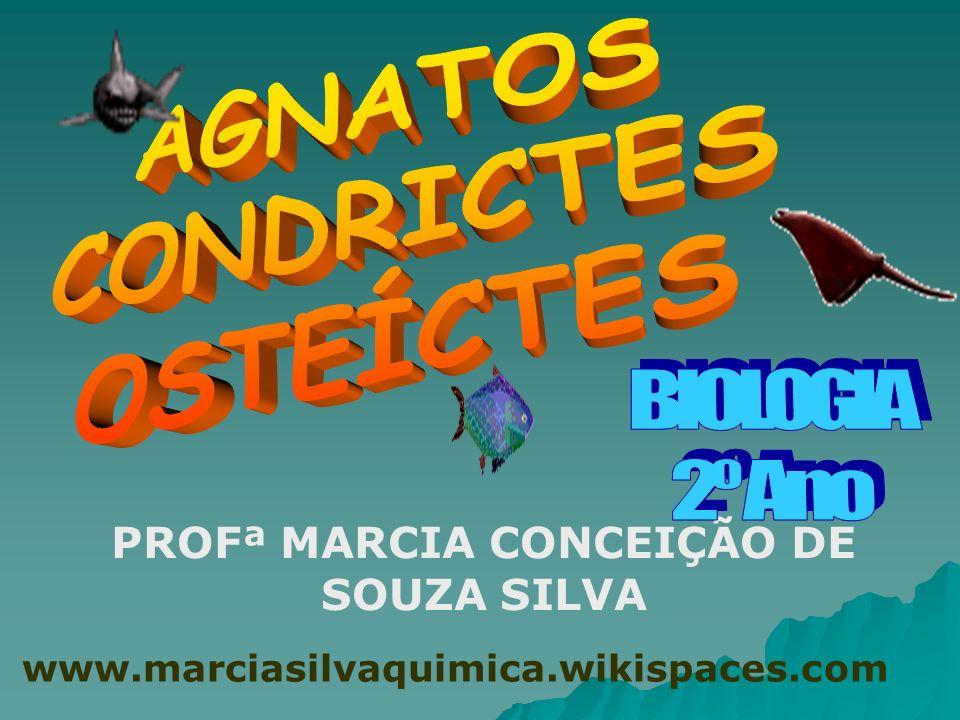 REINO ANIMAL FILO CORDADOS SUBFILO VERTEBRADOS AGNATOSCONDRICTES OSTEÍCTES