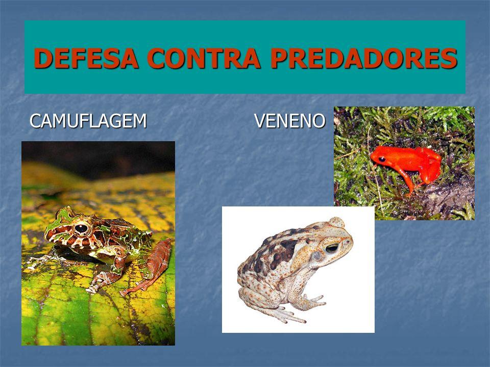 DEFESA CONTRA PREDADORES CAMUFLAGEMVENENO