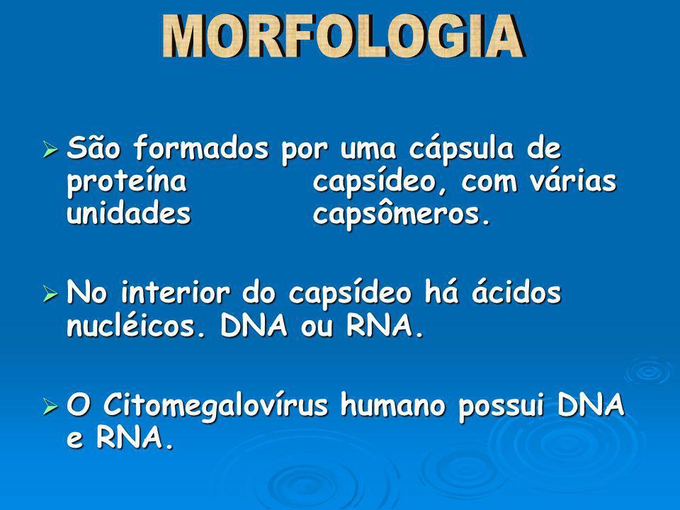 LOPES, Sônia.ROSSO, Sergio. Biologia - Volume único – 1 ed.
