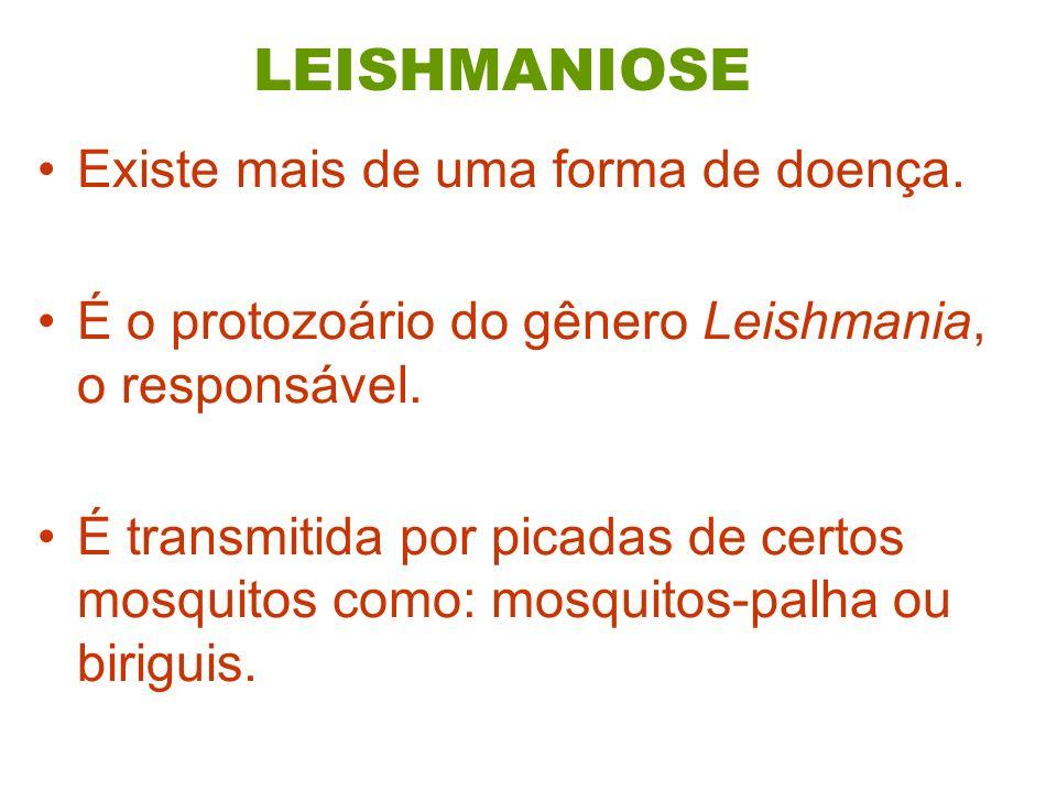 LEISHMANIOSE Existe mais de uma forma de doença. É o protozoário do gênero Leishmania, o responsável. É transmitida por picadas de certos mosquitos co