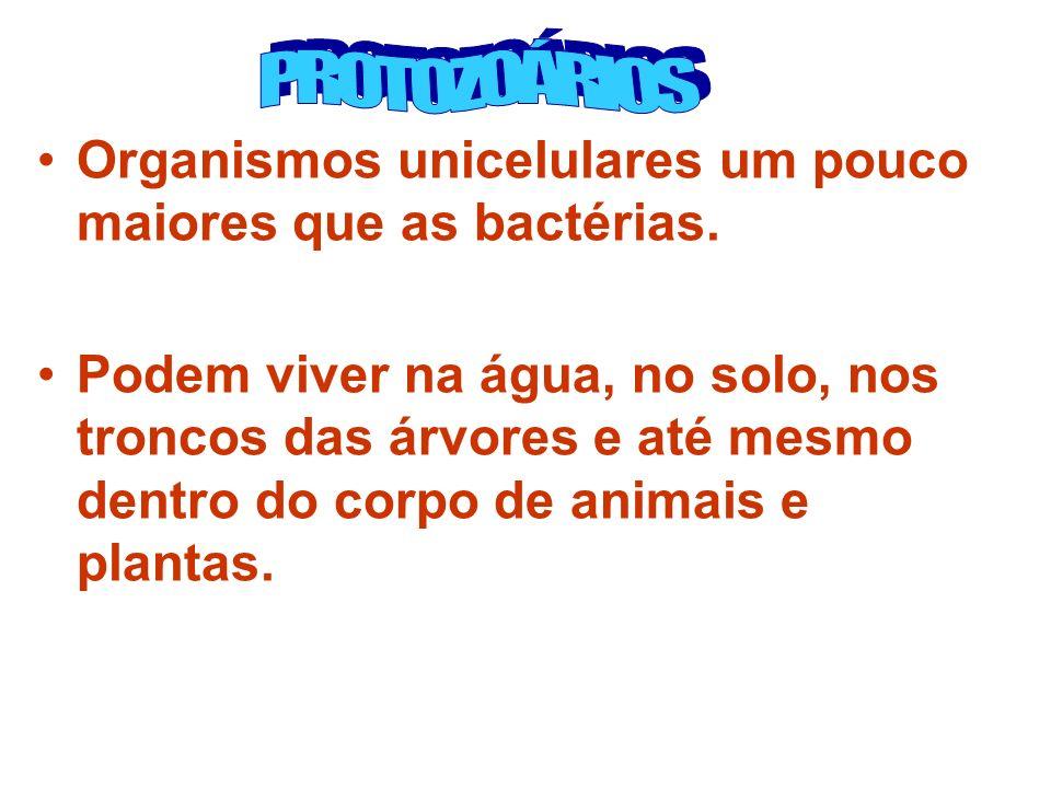 Organismos unicelulares um pouco maiores que as bactérias. Podem viver na água, no solo, nos troncos das árvores e até mesmo dentro do corpo de animai