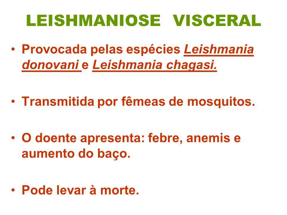 LEISHMANIOSE VISCERAL Provocada pelas espécies Leishmania donovani e Leishmania chagasi. Transmitida por fêmeas de mosquitos. O doente apresenta: febr