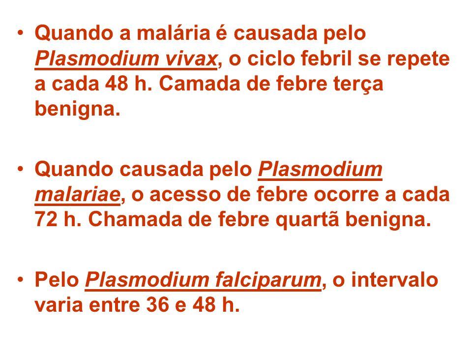 Quando a malária é causada pelo Plasmodium vivax, o ciclo febril se repete a cada 48 h. Camada de febre terça benigna. Quando causada pelo Plasmodium