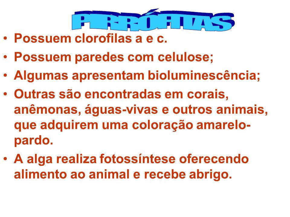 Possuem clorofilas a e c. Possuem paredes com celulose; Algumas apresentam bioluminescência; Outras são encontradas em corais, anêmonas, águas-vivas e
