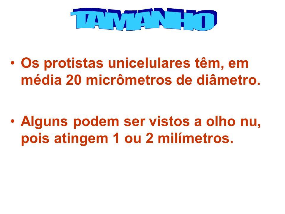 Os protistas unicelulares têm, em média 20 micrômetros de diâmetro. Alguns podem ser vistos a olho nu, pois atingem 1 ou 2 milímetros.