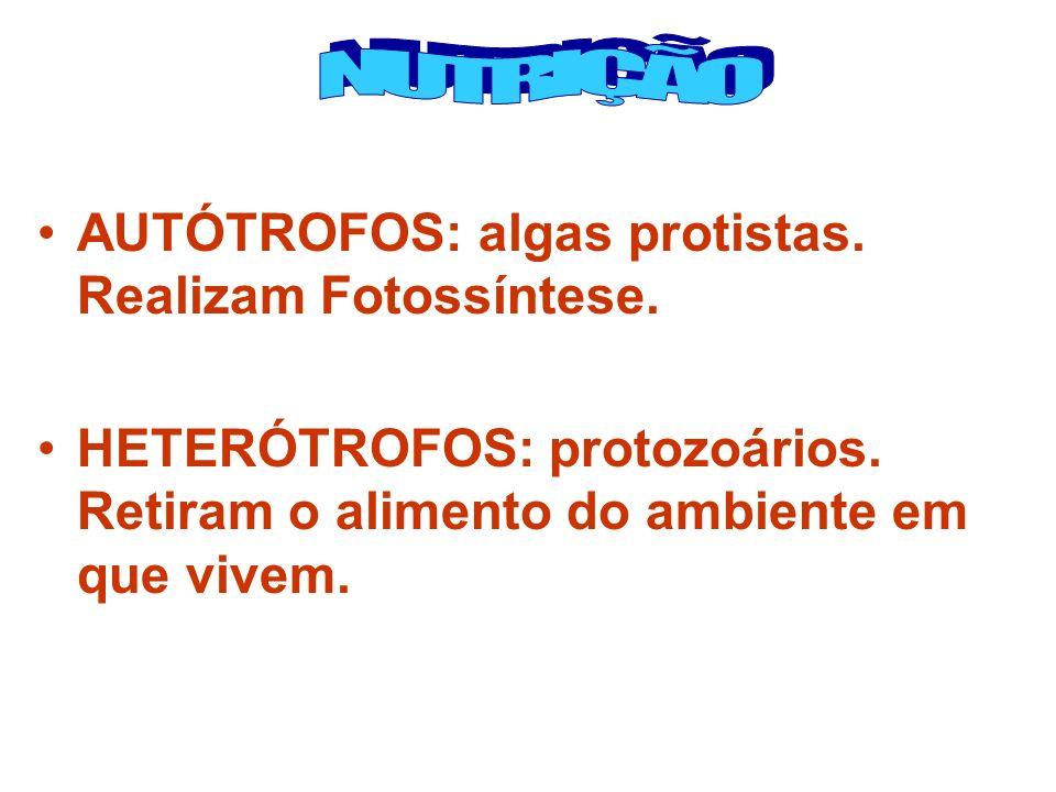 AUTÓTROFOS: algas protistas. Realizam Fotossíntese. HETERÓTROFOS: protozoários. Retiram o alimento do ambiente em que vivem.