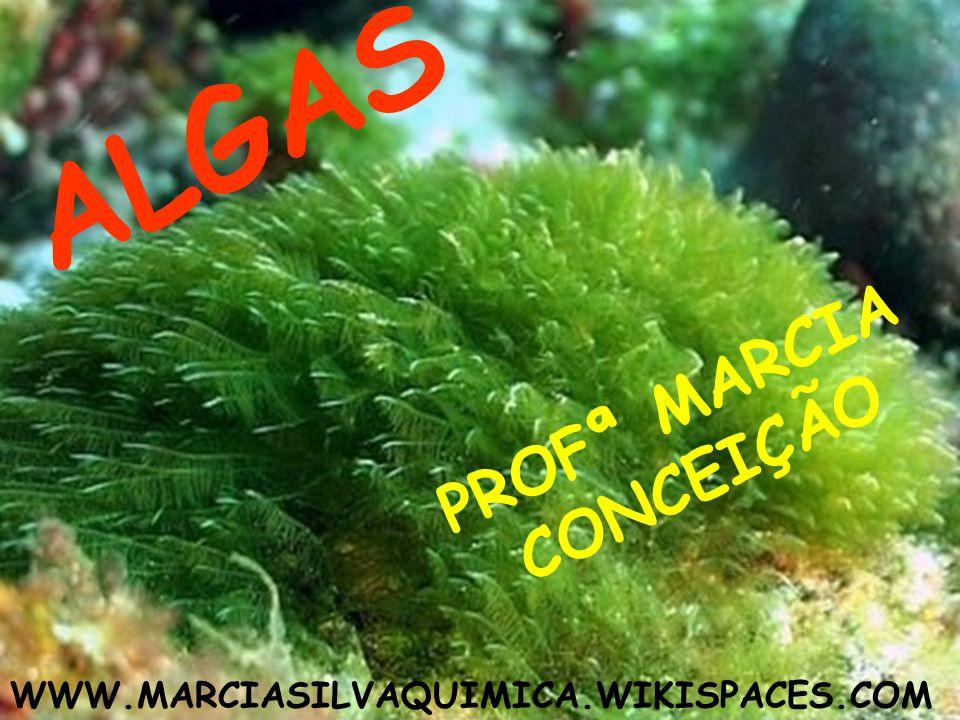 CLOROFÍCEAS São verdes.A clorofila predomina sobre outros pigmentos.