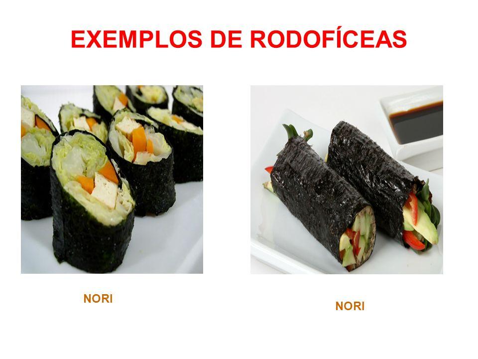 EXEMPLOS DE RODOFÍCEAS NORI