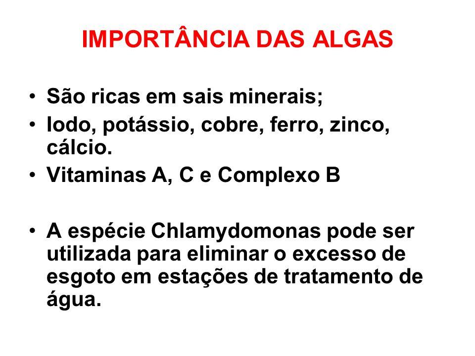 IMPORTÂNCIA DAS ALGAS São ricas em sais minerais; Iodo, potássio, cobre, ferro, zinco, cálcio. Vitaminas A, C e Complexo B A espécie Chlamydomonas pod