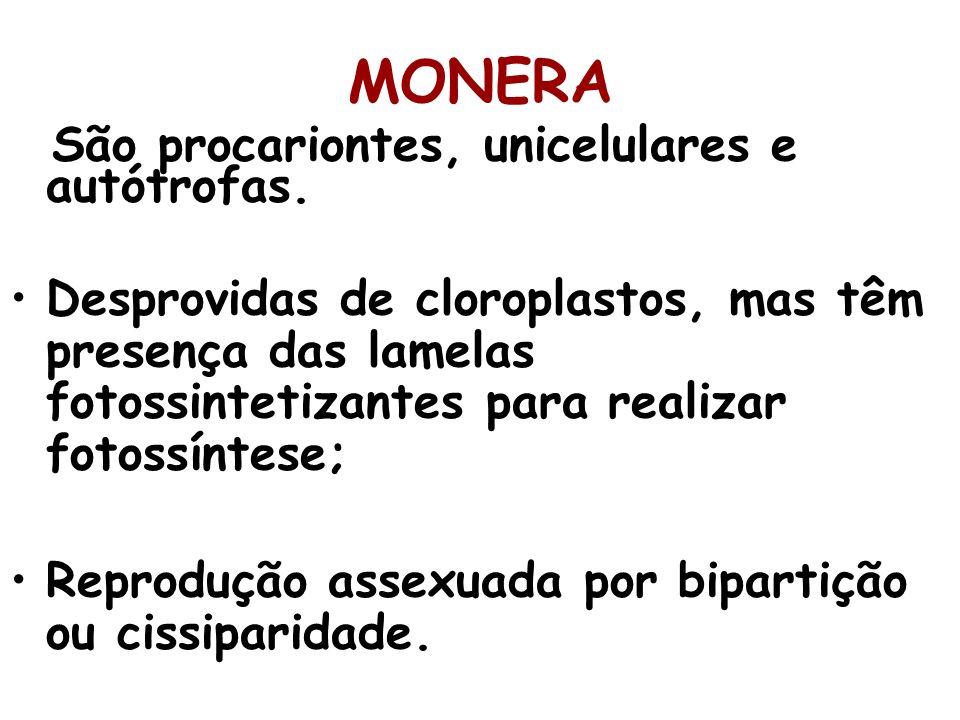 MONERA São procariontes, unicelulares e autótrofas. Desprovidas de cloroplastos, mas têm presença das lamelas fotossintetizantes para realizar fotossí