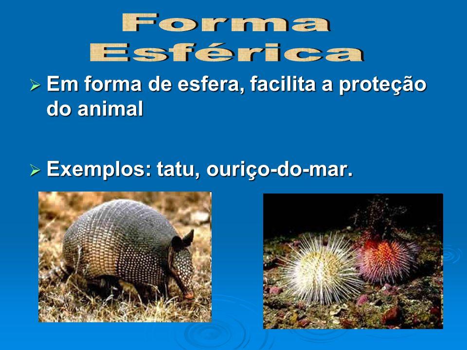 Em forma de esfera, facilita a proteção do animal Em forma de esfera, facilita a proteção do animal Exemplos: tatu, ouriço-do-mar. Exemplos: tatu, our