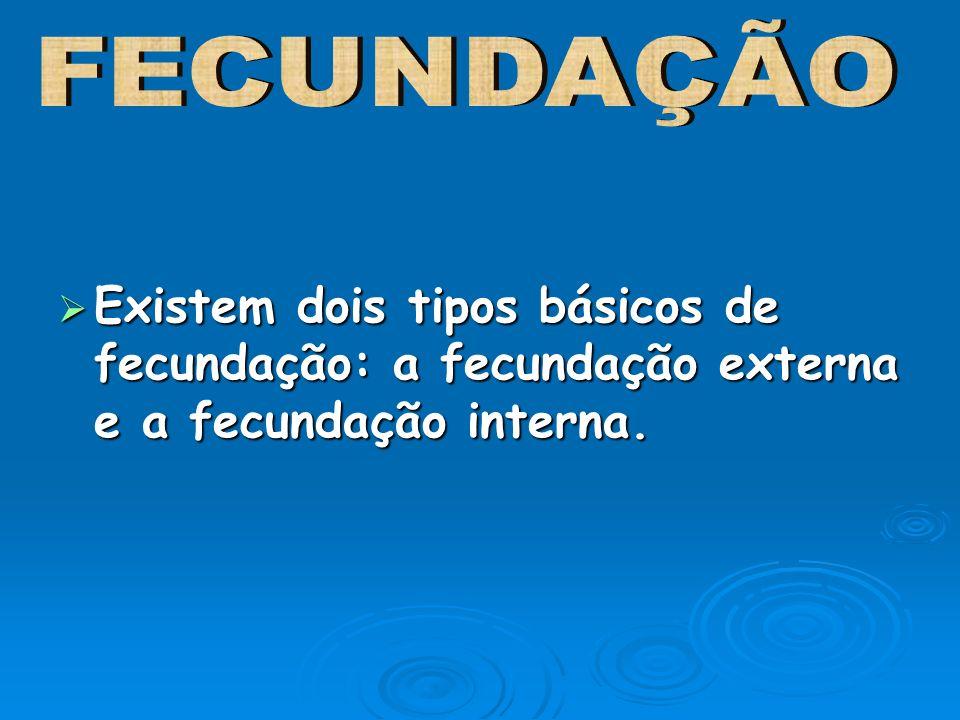 Existem dois tipos básicos de fecundação: a fecundação externa e a fecundação interna. Existem dois tipos básicos de fecundação: a fecundação externa