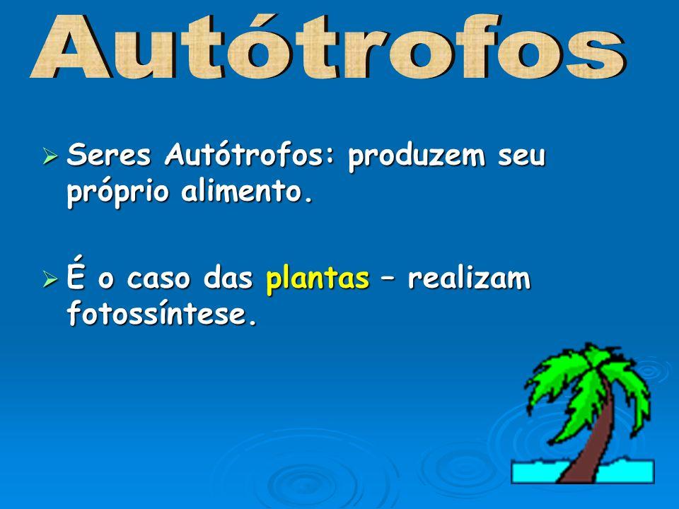 Seres Autótrofos: produzem seu próprio alimento. Seres Autótrofos: produzem seu próprio alimento. É o caso das plantas – realizam fotossíntese. É o ca
