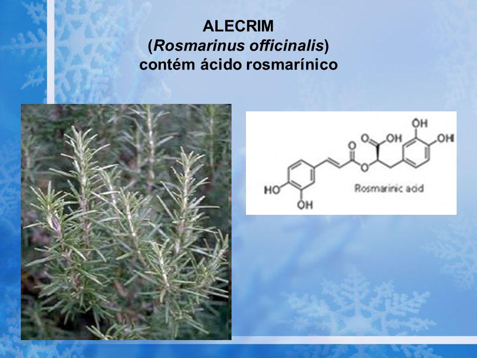 ALECRIM (Rosmarinus officinalis) contém ácido rosmarínico