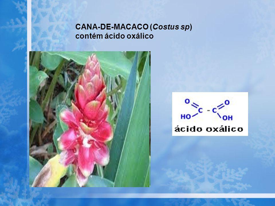 CANA-DE-MACACO (Costus sp) contém ácido oxálico