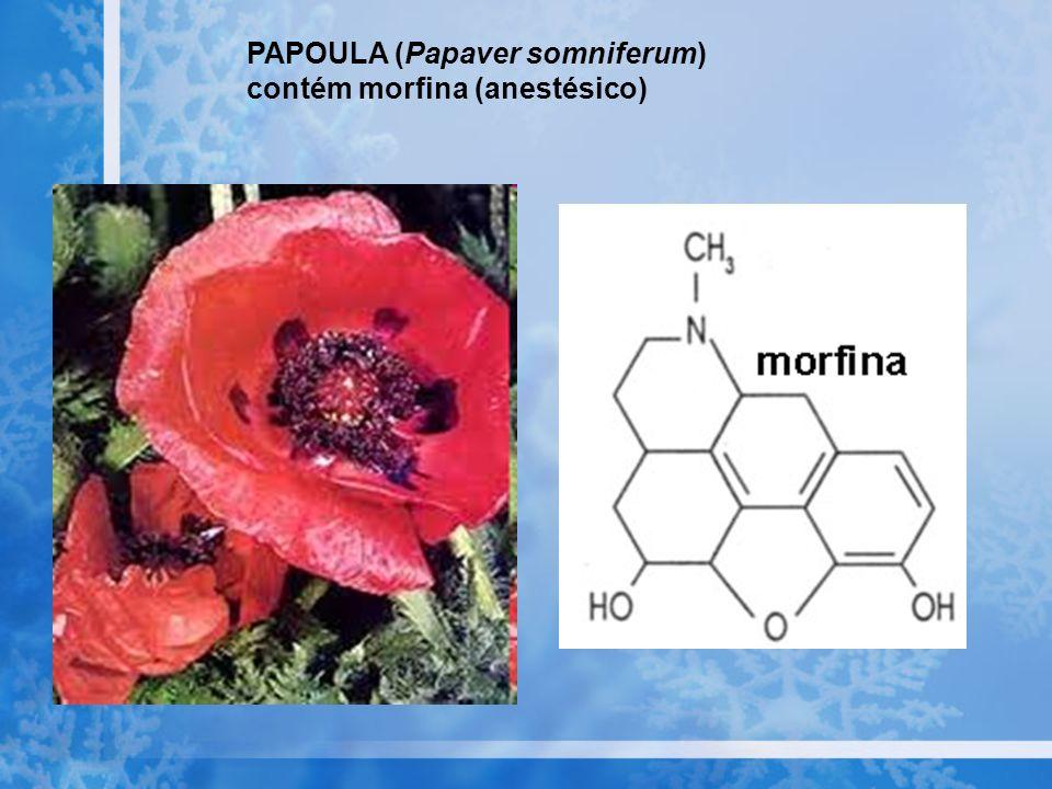 PAPOULA (Papaver somniferum) contém morfina (anestésico)