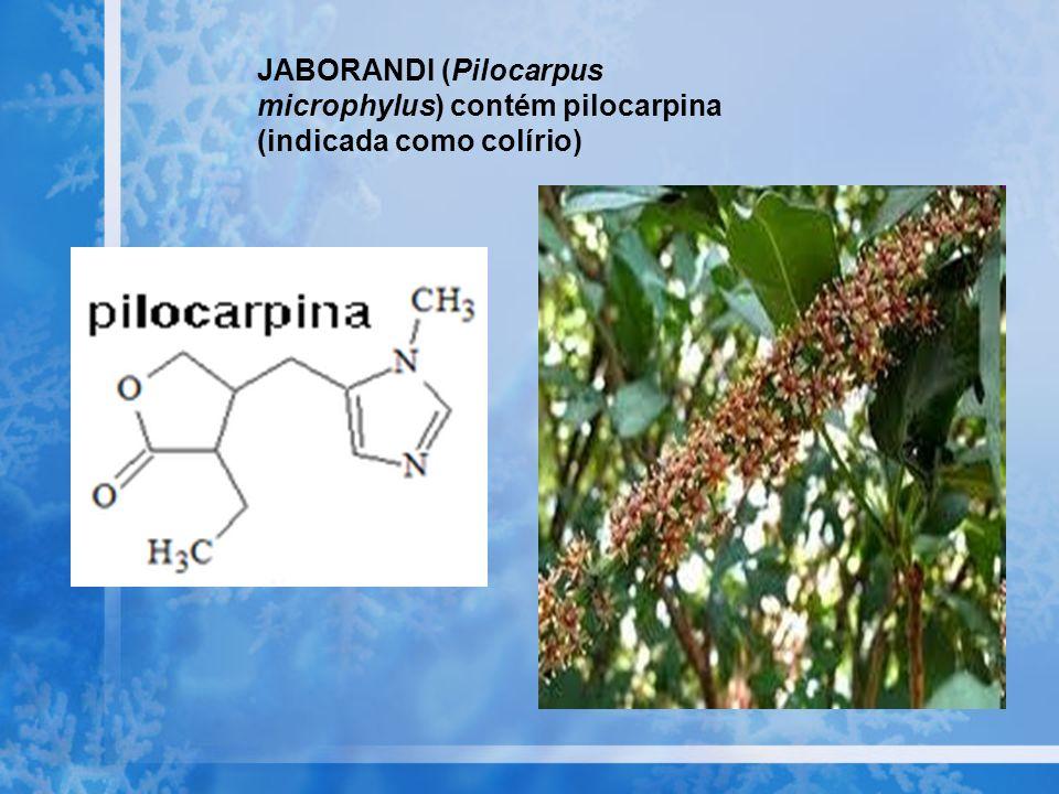 JABORANDI (Pilocarpus microphylus) contém pilocarpina (indicada como colírio)