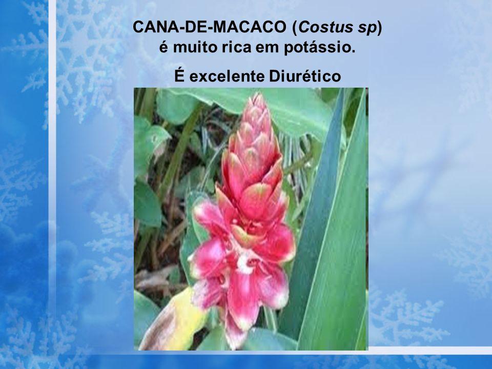 CANA-DE-MACACO (Costus sp) é muito rica em potássio. É excelente Diurético