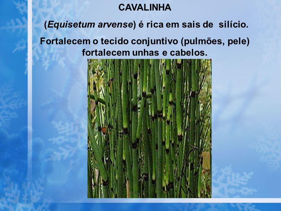CAVALINHA (Equisetum arvense) é rica em sais de silício. Fortalecem o tecido conjuntivo (pulmões, pele) fortalecem unhas e cabelos.