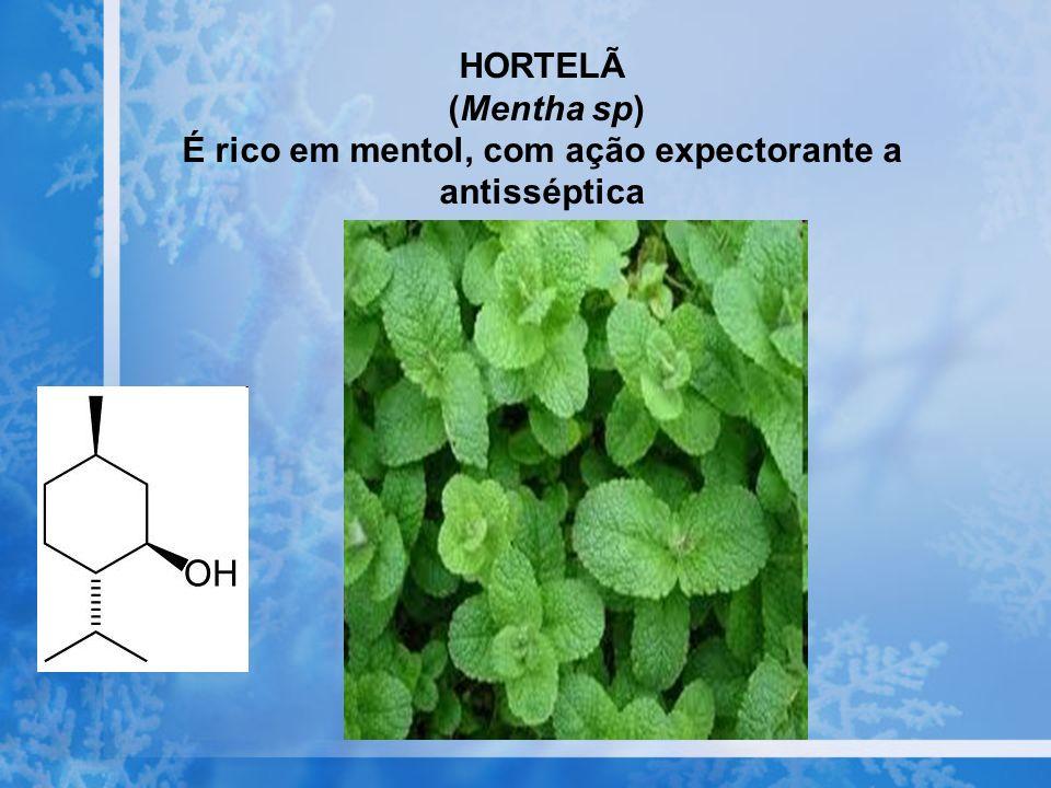 HORTELÃ (Mentha sp) É rico em mentol, com ação expectorante a antisséptica