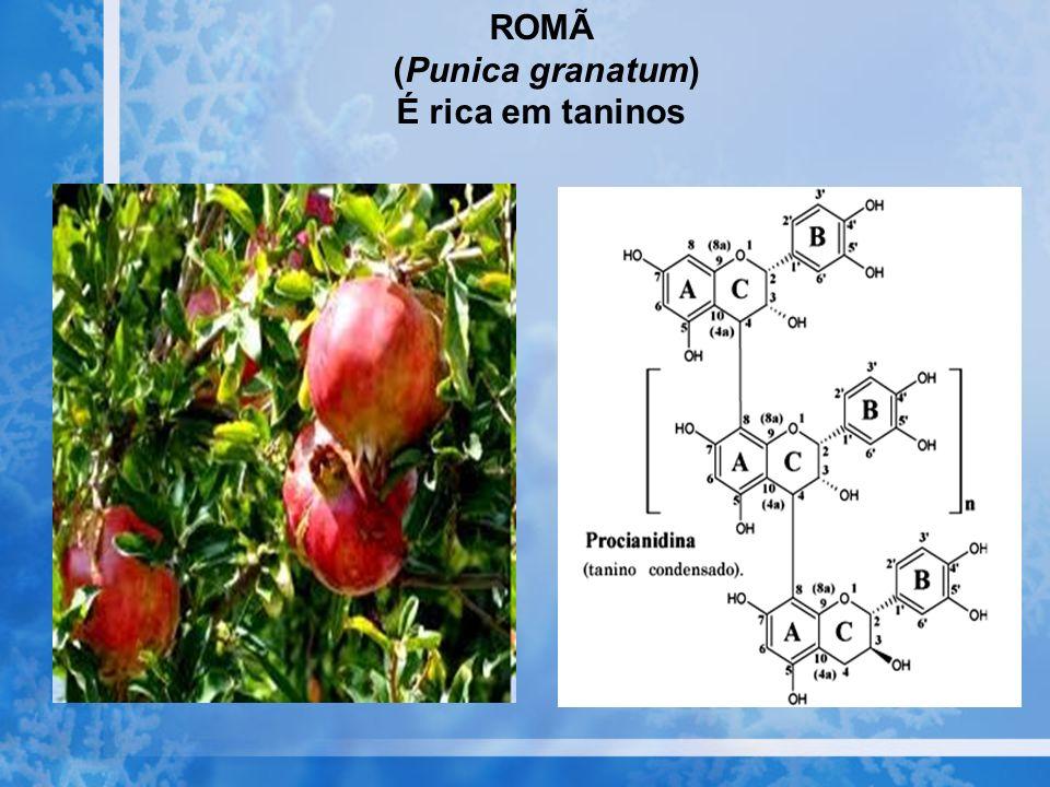 ROMÃ (Punica granatum) É rica em taninos