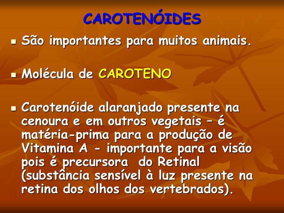 CAROTENÓIDES São importantes para muitos animais. São importantes para muitos animais. Molécula de CAROTENO Molécula de CAROTENO Carotenóide alaranjad