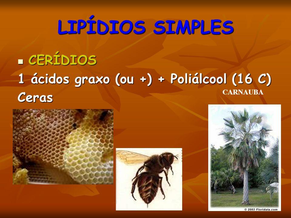 LIPÍDIOS SIMPLES CERÍDIOS CERÍDIOS 1 ácidos graxo (ou +) + Poliálcool (16 C) Ceras CARNAUBA