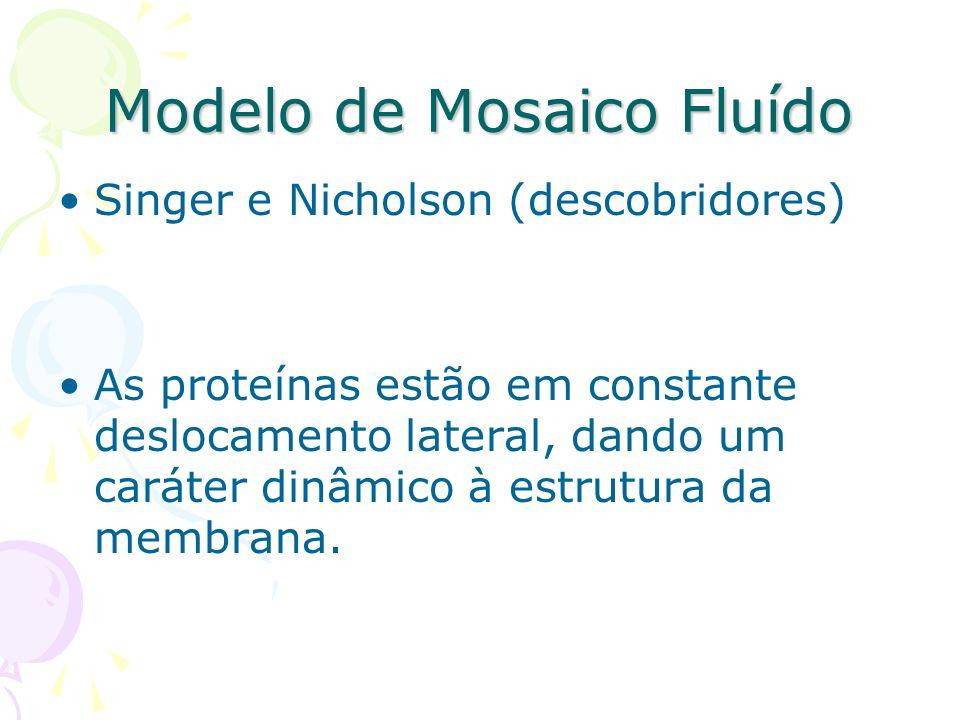 Modelo de Mosaico Fluído Singer e Nicholson (descobridores) As proteínas estão em constante deslocamento lateral, dando um caráter dinâmico à estrutur