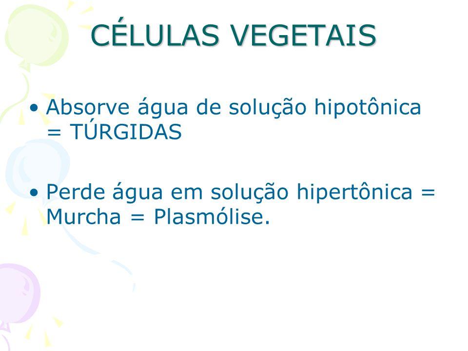CÉLULAS VEGETAIS Absorve água de solução hipotônica = TÚRGIDAS Perde água em solução hipertônica = Murcha = Plasmólise.