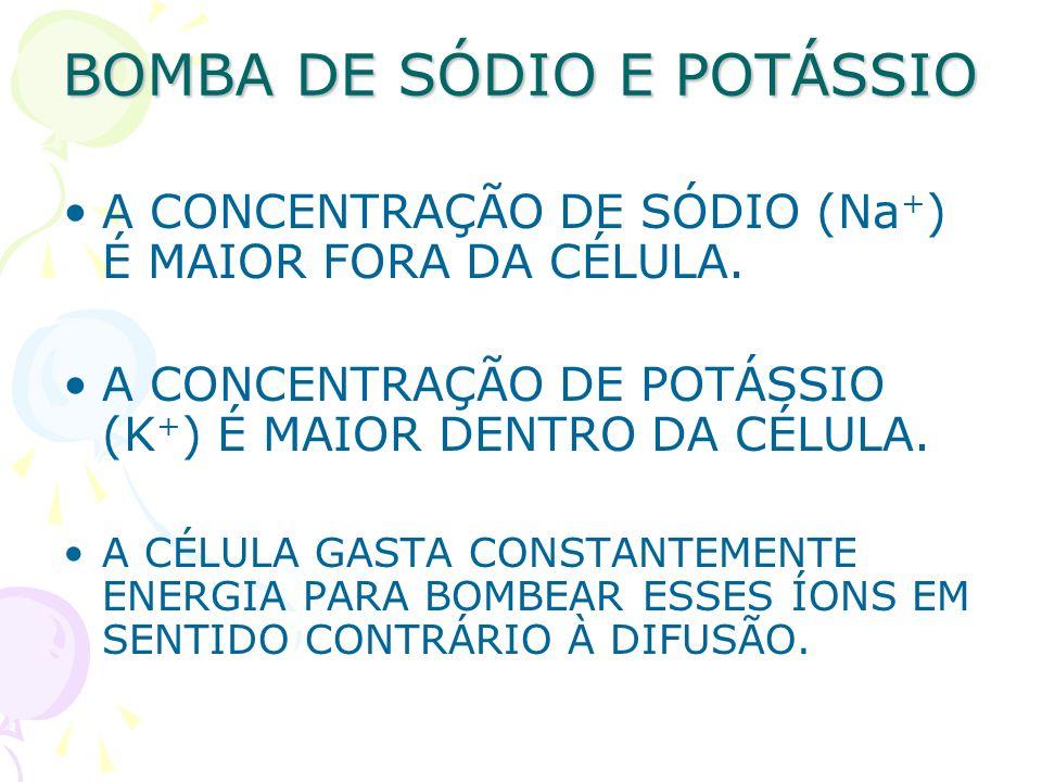 BOMBA DE SÓDIO E POTÁSSIO A CONCENTRAÇÃO DE SÓDIO (Na + ) É MAIOR FORA DA CÉLULA. A CONCENTRAÇÃO DE POTÁSSIO (K + ) É MAIOR DENTRO DA CÉLULA. A CÉLULA