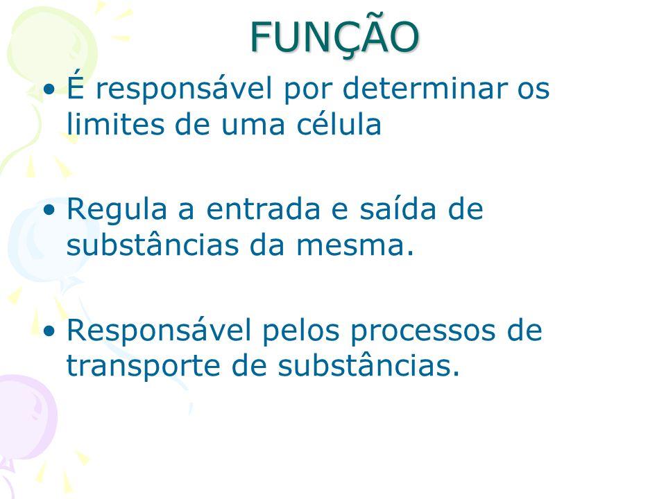 FUNÇÃO É responsável por determinar os limites de uma célula Regula a entrada e saída de substâncias da mesma. Responsável pelos processos de transpor