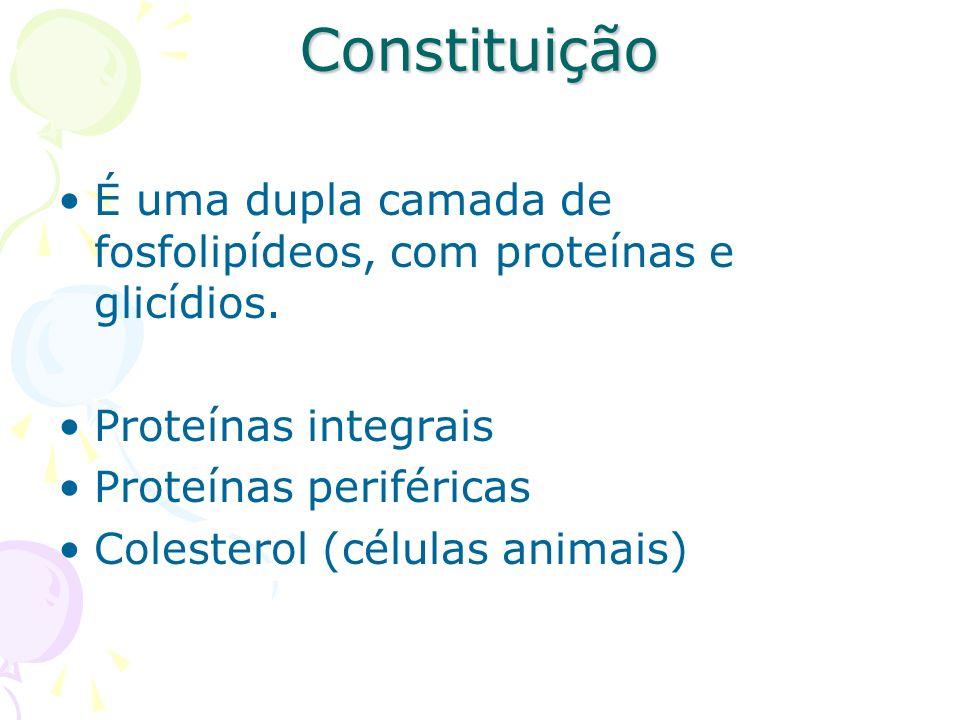 Constituição É uma dupla camada de fosfolipídeos, com proteínas e glicídios. Proteínas integrais Proteínas periféricas Colesterol (células animais)