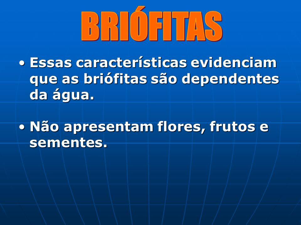 Essas características evidenciam que as briófitas são dependentes da água.Essas características evidenciam que as briófitas são dependentes da água. N