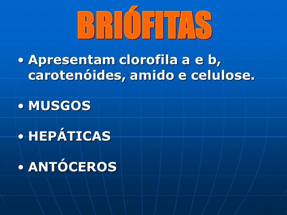 Apresentam clorofila a e b, carotenóides, amido e celulose.Apresentam clorofila a e b, carotenóides, amido e celulose. MUSGOSMUSGOS HEPÁTICASHEPÁTICAS