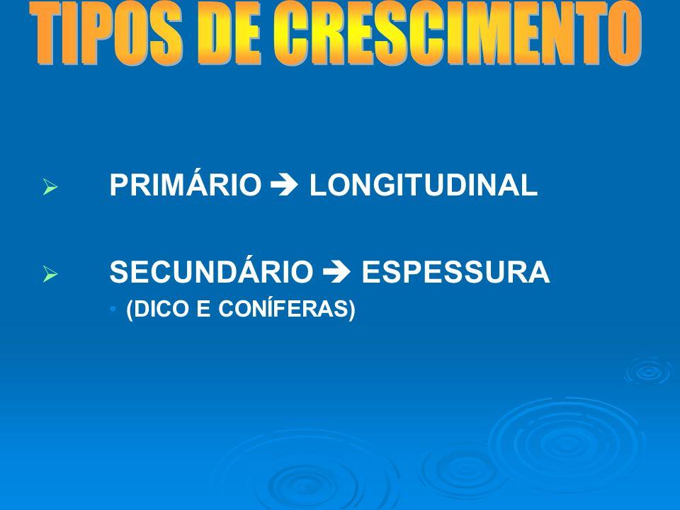PRIMÁRIO LONGITUDINAL SECUNDÁRIO ESPESSURA (DICO E CONÍFERAS)