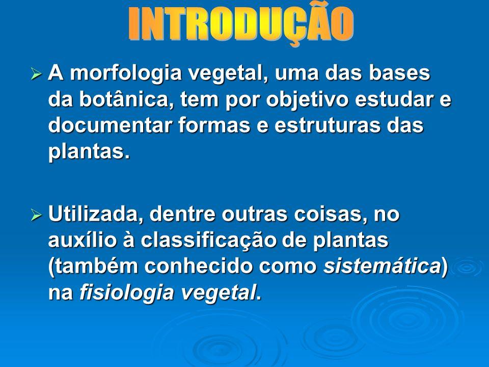 A morfologia vegetal, uma das bases da botânica, tem por objetivo estudar e documentar formas e estruturas das plantas. A morfologia vegetal, uma das