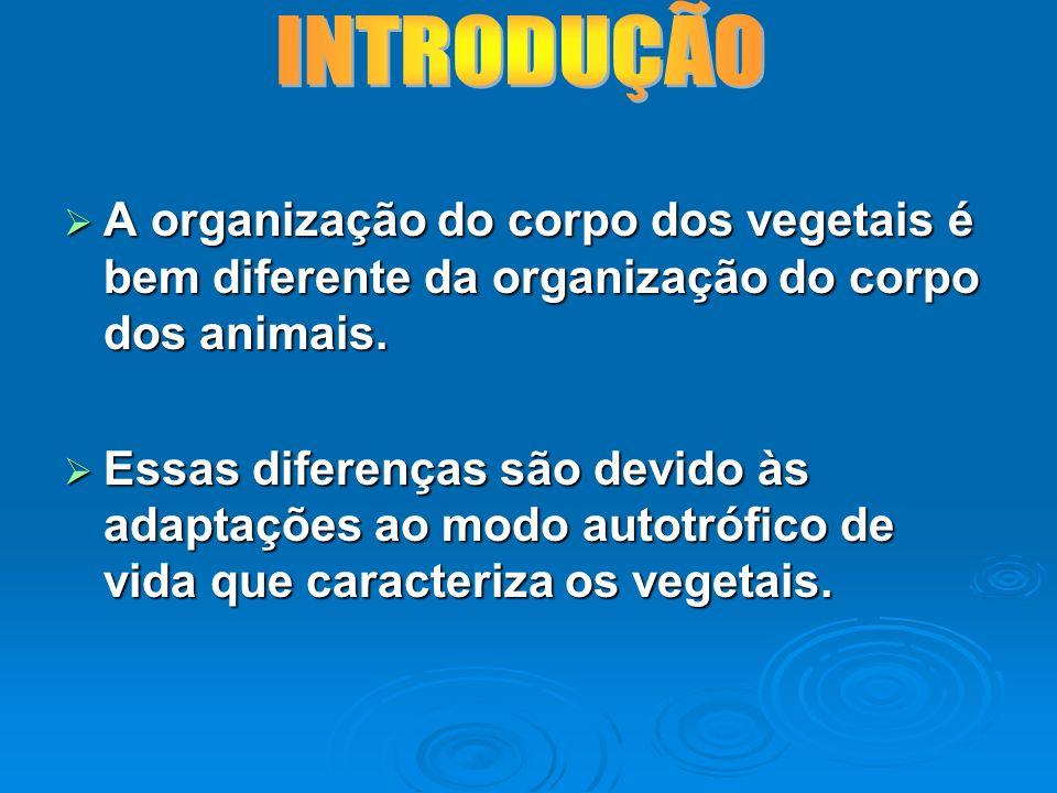 A organização do corpo dos vegetais é bem diferente da organização do corpo dos animais. A organização do corpo dos vegetais é bem diferente da organi
